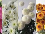 Jual bunga potong di bali
