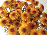 Bunga potong -Chrisan Lexy